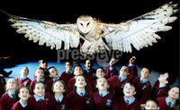 Primary School students get a lesson on birds of prey