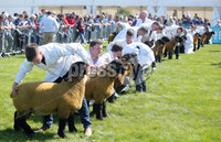 Press Eye - Belfast - Northern Ireland - 16th May 2018. First day of the 2018 Balmoral Show, in partnership with Ulster Bank, at Balmoral Park.  Sheep judging takes place at the 150th Balmoral show. . Picture by Jonathan Porter/PressEye