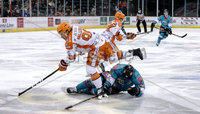 Press Eye - Belfast, Northern Ireland - 06th December 2019 - Photo by William Cherry/Presseye. Belfast Giants\' Curtis Hamilton with Sheffield Steelers\' Marc-Olivier Vallerand during Friday nights Elite Ice Hockey League game at the SSE Arena, Belfast.       Photo by William Cherry/Presseye