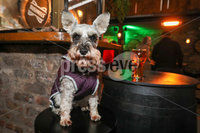 Press Eye - Belfast - Northern Ireland - 10th October 2020. New coronavirus restrictions come into force on Friday evening.. Punters make the most of the last few hours. . Tricksy in the Thirsty Goat.. Picture by Matt Mackey / Presseye.