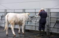 15th May 2017 - Picture by Matt Mackey / PressEye.com. Final preparations are under way for the 150th Balmoral Show.. .