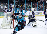 Press Eye - Belfast -  Northern Ireland - 03rd February 2019 - Photo by William Cherry/Presseye. Belfast Giants\' Blair Riley celebrates Colin Shields scoring against the Guildford Flames during Friday nights Elite Ice Hockey League game at the SSE Arena, Belfast.   Photo by William Cherry/Presseye