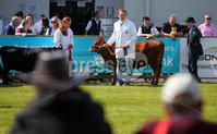 Press Eye - Belfast - Northern Ireland - 15th May 2019. First day of the Balmoral Show, in partnership with Ulster Bank: Showing cattle takes place in the main area at Balmoral Park outside Lisburn. .  . Picture by Jonathan Porter/PressEye