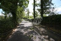 PressEye - Belfast - Northern Ireland - 14th June 2018. The A30 Glenavy Road was closed due to a fallen tree caused by strong winds.. Picture: Philip Magowan / PressEye