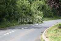 PressEye - Belfast - Northern Ireland - 14th June 2018. Strong winds have brought trees down on the Ballinderry Road, Lisburn.. Picture: Philip Magowan / PressEye