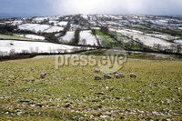 Press Eye - Belfast - Northern Ireland - 12th February 2020. Sheep grazing at Glenshane Pass, with snow in the mountains. . Picture by John Stafford/Presseye
