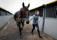 15th May 2017 - Picture by Matt Mackey / PressEye.com. Final preparations are under way for the 150th Balmoral Show.. Andrea McKee from Killinchy along with her horse