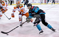 Press Eye - Belfast -  Northern Ireland - 06th January 2019 - Photo by William Cherry/Presseye. Belfast Giants\' Patrick Dwyer with Sheffield Steelers\' Robert Dowd during Sunday afternoons Elite Ice Hockey League game at the SSE Arena, Belfast.    Photo by William Cherry/Presseye