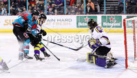 Press Eye - Belfast -  Northern Ireland - 11th February 2018 - Photo by William Cherry/Presseye. Belfast Giants Darcy Murphy scoring against Manchester Storm during Sunday afternoons Elite Ice Hockey League game at the SSE Arena, Belfast.