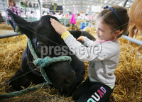 Press Eye - Belfast - Northern Ireland - 16th May 2019. Day two of the Balmoral Show in partnership with Ulster Bank at Balmoral Park outside Lisburn.  Tori Veitch from Lisbellaw in Co. Fermanagh, who is celebrating her sixth birthday, prepare the family bullock ahead of today\'s showing. . Picture by Jonathan Porter/PressEye
