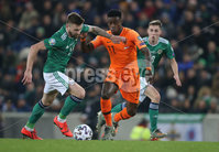 PressEye-Northern Ireland- 16th November 2019-Picture by Brian Little/PressEye. Northern Ireland Stuart Dallas   and Netherlands Quincy Promes   during Saturday\'s EURO 2020 Qualifier at the National Football Stadium at Windsor Park.. Picture by Brian Little/PressEye