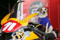 PressEye - Belfast - Northern Ireland - 21st April 2017. The Around-A-Pound Tandragee 100 Road Races.. Pictured: It\'s a dog\'s life.. Picture: Philip Magowan / PressEye