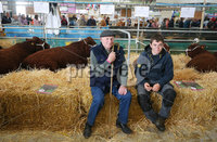 Press Eye - Belfast - Northern Ireland - 16th May 2019. Day two of the Balmoral Show in partnership with Ulster Bank at Balmoral Park outside Lisburn.  Resting in the cattle shed. .  . Picture by Jonathan Porter/PressEye