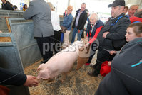 Press Eye - Belfast - Northern Ireland - 16th May 2019. Day two of the Balmoral Show in partnership with Ulster Bank at Balmoral Park outside Lisburn. Agnes Todd from Banbridge with her awarding winning pigs. .  . Picture by Jonathan Porter/PressEye