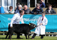 Press Eye - Belfast - Northern Ireland - 16th May 2018. First day of the 2018 Balmoral Show, in partnership with Ulster Bank, at Balmoral Park.  Cattle showing in the parade ring. . Picture by Jonathan Porter/PressEye