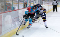Press Eye - Belfast -  Northern Ireland - 09th August 2017 - Belfast Giants Steve Saviano with Guilford Flames Tomas Nechala during Saturday nights Elite Ice Hockey League game at the SSE Arena, Belfast.  Photo by Presseye