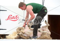 Press Eye - Belfast - Northern Ireland - 16th May 2019. Day two of the Balmoral Show in partnership with Ulster Bank at Balmoral Park outside Lisburn.  Sheep shearing at the show. .  . Picture by Jonathan Porter/PressEye