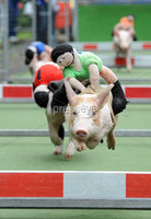 . ©Press Eye Ltd Northern Ireland - 16th June  2012. Hundreds of spectators turned out to watch the featured races of the day in the form of pigs saddled with teddys  at the annual Greenmount show in Antrim. Mandatory Credit - Picture by Stephen Hamilton /Presseye.com. .