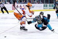 Press Eye - Belfast -  Northern Ireland - 06th January 2019 - Photo by William Cherry/Presseye. Belfast Giants\' Lewis Hook with Sheffield Steelers\' Ryan Martinelli during Sunday afternoons Elite Ice Hockey League game at the SSE Arena, Belfast.    Photo by William Cherry/Presseye