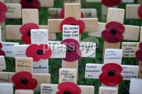 Press Eye - Belfast - Northern Ireland - 12th November 2017 . General view at The Cenotaph in the Garden of Remembrance, City Hall Grounds, Belfast during the National Day of Remembrance . It is the city of Belfast's tribute to the memory of those who died in the Great War and the Second World War. . . Photo by Kelvin Boyes / Press Eye..