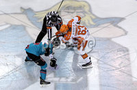 Press Eye - Belfast, Northern Ireland - 06th December 2019 - Photo by William Cherry/Presseye. Belfast Giants\' Brian Ward with Sheffield Steelers\' Brendan Connolly during Friday nights Elite Ice Hockey League game at the SSE Arena, Belfast.       Photo by William Cherry/Presseye